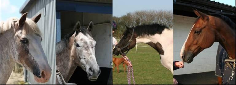 Gabbys Horses